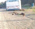 Registran 4 muertos y cinco decapitados