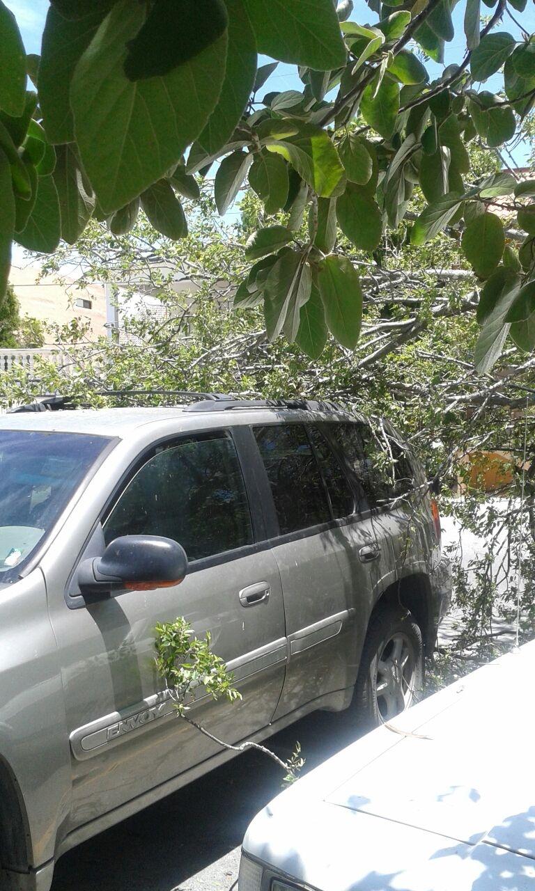 AFECTADA. Una camioneta marca GMC, tipo Envoy, color arena, también resultó afectada por las ramas del pesado árbol; sin embargo, afortunadamente no se reportaron personas lesionadas. (Foto: Heriberto Rodríguez)