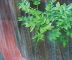 Benéficas lluvias caen en canícula