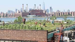 Una granjera en el tejado