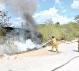 Rescatan bomberos a tlacuache