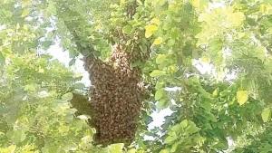 En peligro de ser atacados por abejas