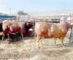 Recibirán ganaderos melasa con subsidio