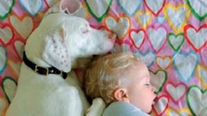 La perrita que supera los malos tratos gracias a un bebé