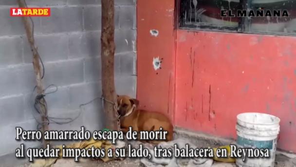 ¡Se salva milagrosamente! Este es el perrito que por poco muere al quedar impactos a su lado, tras balacera en Reynosa