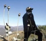 Cambian amapola por marihuana en México