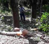 Muere al caerle brazo de árbol en Antiguo Morelos