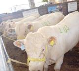 Benefician a ganaderos con mejoramiento genético del gobierno del estado de Tamaulipas
