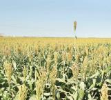Participarán productores en Congreso Biotecnológico