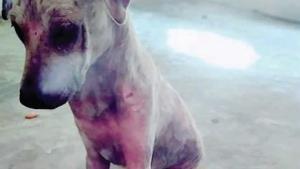 Realizan una campaña canina contra el cáncer
