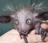 Animales extraños que hoy habitan en nuestro planeta