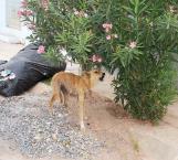 Esterilización de mascotas para evitar sobrepoblación