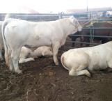 Expectativa de ganaderos sobre rumbo de producción pecuaria en el sexenio