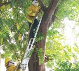 Reportan serie de ataques de abejas en Reynosa