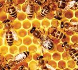 Piden no se arriesguen a combatir a las abejas, puede ser contraproducente