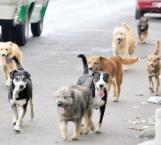 Esterilzación de perros y gatos, para evitar sacrificios