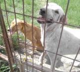 Envenenan a mascotas para robar