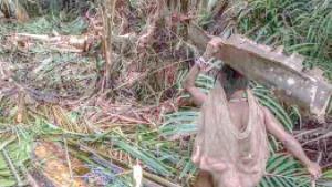 En jungla de Indonesia se esconde una tribu