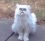 Este gato aterró en internet por su mirada perturbadora
