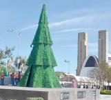 Instalan en Plaza Principal el pino navideño tradicional