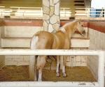 Esperan vender carne de caballo