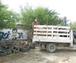 Reanudarán combate al dengue en colonias