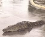 Temen ataques de cocodrilos