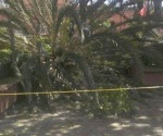 Mueren 2 tras fuertes vientos en Oaxaca