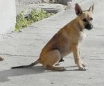 También mascotas contaminan y propagan enfermedades