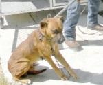 Aumentan casos de incursiones de animales