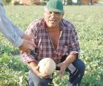 Quedan aquí sólo el 5% de las cosechas