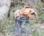 Contaminan ambiente con animal muerto