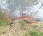 Arde hierba seca que amenazaba a las viviendas