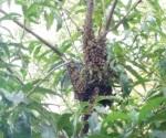 Combaten enjambre de abejas en jardín