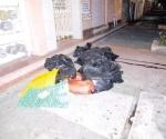 Hallan 6 bolsas con restos en Veracruz