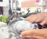 Hasta las palomas por el calorón