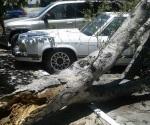 Dos vehículos sufren daños al caerles un árbol encima