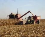 Malbarata Aserca el maíz tamaulipeco