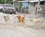 Buscan resolver problema de los perros callejeros