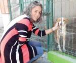 Ofrecen en adopción a tres perros