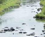 Demandan limpia del canal Rodhe
