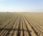 Buena perspectiva para el campo con tierra bien humeda