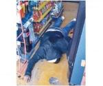 Presunto ladrón mata por error a cómplice