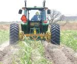 Desprotegen labor agrícola