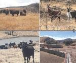 Aseguran 4 nuevos ranchos a C. Duarte
