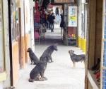 Perros de la calle,  un serio problema