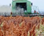 Pagan cosechas a los productores acreditados