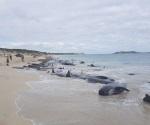 La orilla de la  playa  era un cementerio