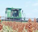 Planean rotación de cultivo para cambio de uso de suelo
