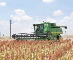 Esperan levantar buenas cosechas los campesinos